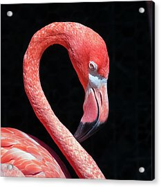 Acrylic Print featuring the photograph Pink Flamingo by Robert Bellomy