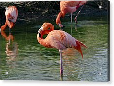 Acrylic Print featuring the photograph Pink Flamingo by Scott Carruthers