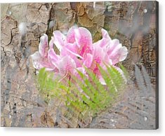 Acrylic Print featuring the photograph Pink Flower Bark by Amanda Eberly-Kudamik