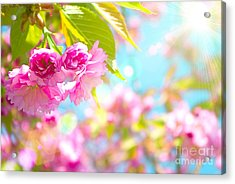 Pink  Flower Beautiful Acrylic Print by Boon Mee