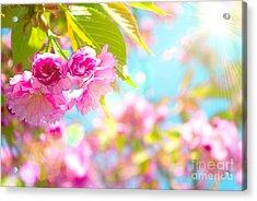 Pink  Flower Beautiful Acrylic Print
