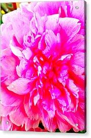 Pink Flower Bloom Acrylic Print