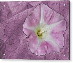 Pink Flower Acrylic Print
