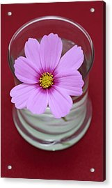 Pink Flower Acrylic Print by Frank Tschakert