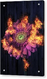 Pink Flower In Flames Acrylic Print by Garry Gay
