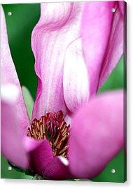 Pink Flower Acrylic Print by Lynn Reid