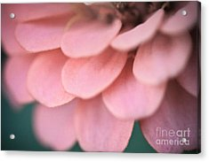 Pink Flower Petals Acrylic Print by Ryan Kelly