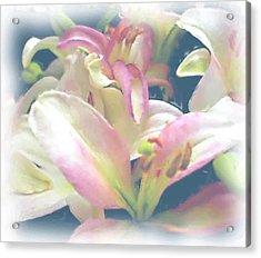 Pink Flower Acrylic Print by Ralph Liebstein