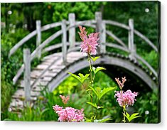 Pink Flower Acrylic Print by Robert Joseph