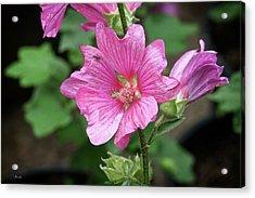 Pink Flower With Bug. Acrylic Print