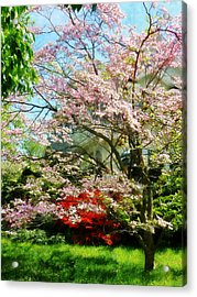 Pink Flowering Dogwood Acrylic Print by Susan Savad
