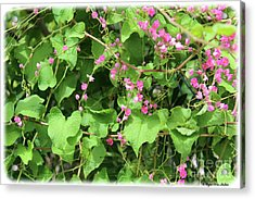 Acrylic Print featuring the photograph Pink Flowering Vine1 by Megan Dirsa-DuBois
