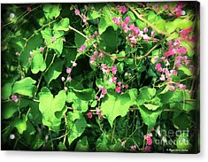 Acrylic Print featuring the photograph Pink Flowering Vine2 by Megan Dirsa-DuBois