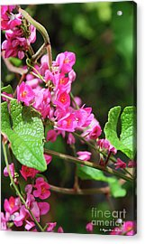 Acrylic Print featuring the photograph Pink Flowering Vine3 by Megan Dirsa-DuBois