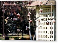 Pink Flowers At Gazebo Acrylic Print by Helena M Langley