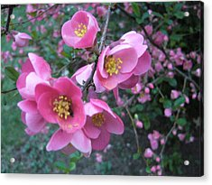 Pink Flowers Acrylic Print by Gonca Yengin