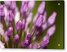 Pink Flowers Acrylic Print by Jouko Mikkola