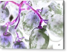 Pink Fluorescence Acrylic Print by Monica Palermo