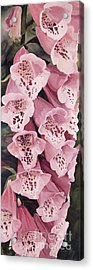 Pink Foxglove Acrylic Print by Laurie Rohner