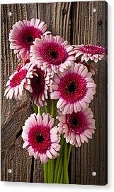 Pink Gerbera Daisies Acrylic Print by Garry Gay
