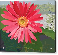 Pink Gerbera Daisy Acrylic Print by Marian Federspiel