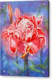 Pink Ginger Acrylic Print by Estela Robles