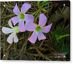 Acrylic Print featuring the photograph Pink Glow by Donna Brown