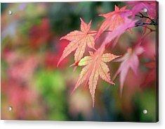 Pink Glow Maple Acrylic Print