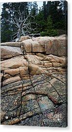 Pink Granite And Driftwood At Schoodic Peninsula In Maine  -4672 Acrylic Print