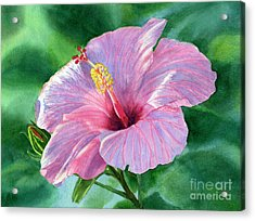 Pink Hibiscus Flower With Leafy Background Acrylic Print