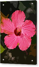 Pink Hibiscus Acrylic Print by Kimberly Camacho