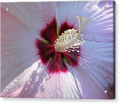 Pink Hibiscus Acrylic Print by Scott Hovind