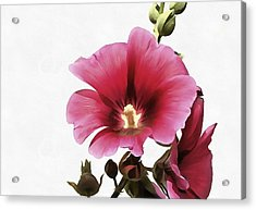 Pink Hollyhock Acrylic Print by Tracey Harrington-Simpson