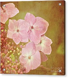 Acrylic Print featuring the photograph Pink Hydrangeas by Lyn Randle