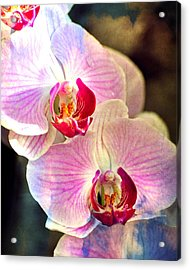 Pink In A Row Acrylic Print