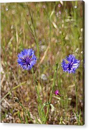 Acrylic Print featuring the photograph Pink In Between by Marie Neder