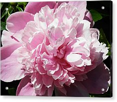 Pink In Bloom Acrylic Print