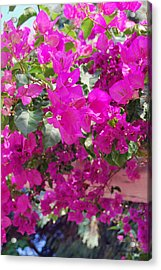 Pink In Rohodes Acrylic Print by Armand Hebert