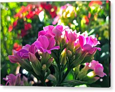 Pink In The Winter Acrylic Print by Gwyn Newcombe