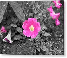 Pink Acrylic Print by Jessica Burgett