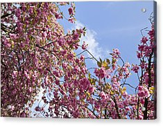 Pink Acrylic Print by Krista  Corcoran Photography