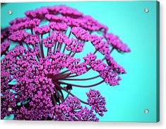 Pink Lace 02 Acrylic Print by Bobby Villapando