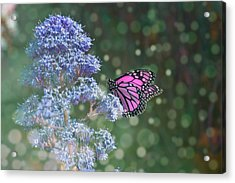 Acrylic Print featuring the photograph Pink Lady by Alison Frank