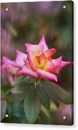 Pink Lady Acrylic Print by Joan Bertucci