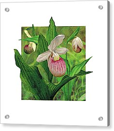 Pink Lady Slipper Acrylic Print by JQ Licensing