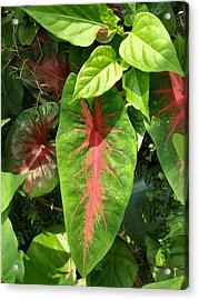 Pink Leaves Acrylic Print by Kathy Daxon