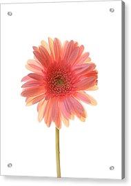 Pink Lemonade Acrylic Print