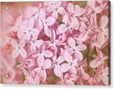 Pink Lilac Acrylic Print