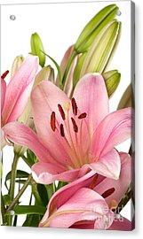 Pink Lilies 07 Acrylic Print by Nailia Schwarz