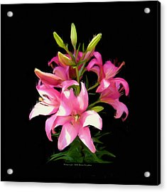 Acrylic Print featuring the digital art Pink Lilies 22103g by Brian Gryphon